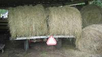 "Hay Sale 4'X4' Round Bales ""No Rain"""