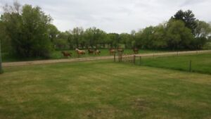 Hobby Farm for Sale