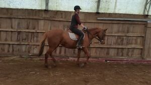 Riding lessons with certified coach indoor arena Belleville Belleville Area image 1