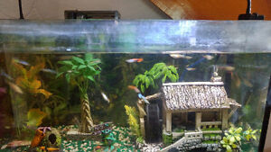 Fish for sale guppies