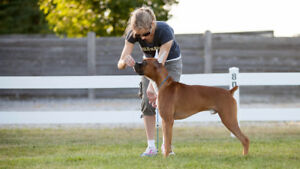Dog Show Handling Classes