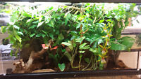 """36""""x18""""x24"""" Display Terrarium with stand for sale"""