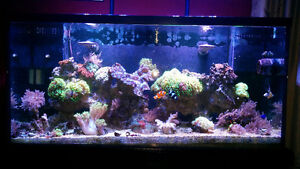 Saltwater corals, liverock and reef sand for sale Cambridge Kitchener Area image 1