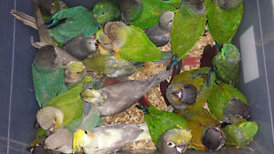 * EXOTIC PETS* BABY CONURES AND TROPICAL FISH