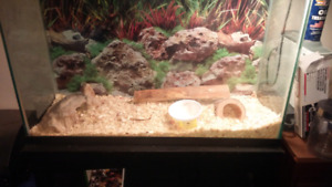 Bumble bee ball python and tank with stand