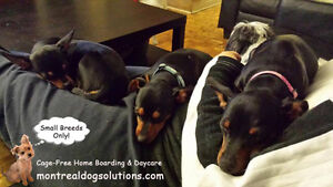 *FULL* MONTREALDOGSOLUTIONS.COM-Cage free boarding small K9's West Island Greater Montréal image 5