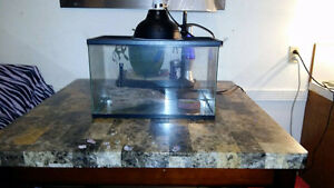 Bearded Dragon Tank with Heat Lamp