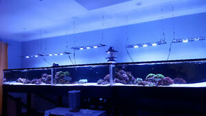 16 foot reef tank moving sale