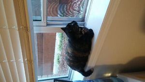 Free to good home beautiful very nice 2 year old cat