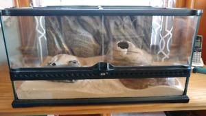Vivarium et gecko léopard