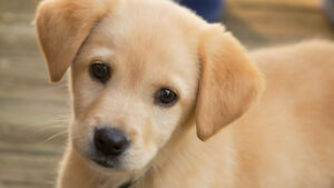 WOOOFFF! Train Your Dog At Home- Online Course for $45