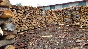 Bois de camping , bois pour foyer extérieur , bois de chauffage