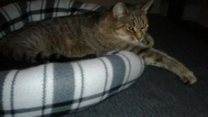 Young adult female cat to loving home