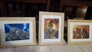 Three shiny pictures of tigers