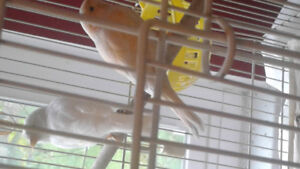 Finches & canary