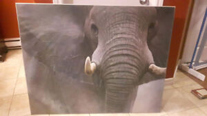 Beautiful Elephant Picture