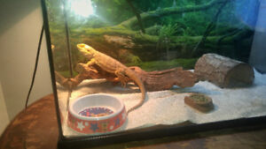Are you looking to rehome your reptile