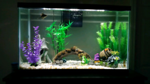 29 Gallon fish tank 1 year old