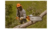 Trees, shrubs, branch trimming and removal; CEDAR HEDGES