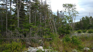 Land For Sale in Tors Cove. Water front view. St. John's Newfoundland image 5