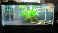 Freshwater aquarium plants(moss and fern)