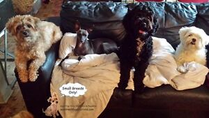 SMALL DOG RESORT IN HOME OF A CERTIFIED TRAINER West Island Greater Montréal image 5