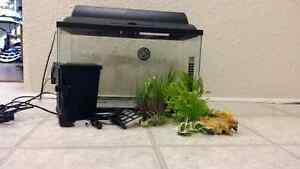 10 gallon tank and everything else you need for a fish