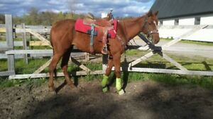 Thoroughbred Mare for sale!