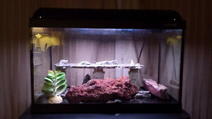 Fish Tank with light up lid and stand and other accessories