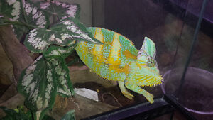 looking for unwanted reptiles tortoises or snakes