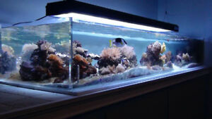 Beautiful 200 Gallon Shallow Acrylic Aquarium