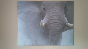 large elephant picture , paid $300 asking $80