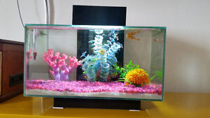 Fluval Edge 6 gallon Fish tank with 4 Fishes