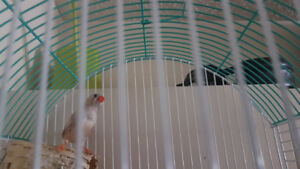 $40.00 Bird with cage.  don't have time for her