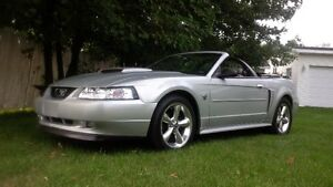 mustang gt v 8 4.6 litres 40e anniversaire cove