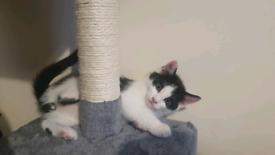 RESERVED Male kitten looking for new home