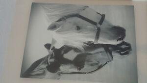 Horse Portrait Canvas