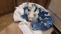EARLY CHRISTMAS DELIGHTFUL PUPPYS