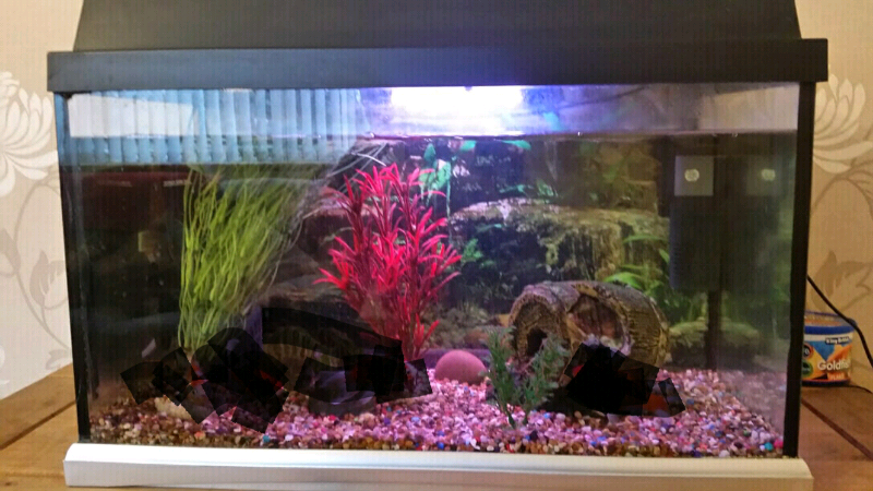 Fish tank for sale £40 | in Blairgowrie, Perth and Kinross | Gumtree
