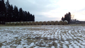 20 Bales of Weather Straw for sale