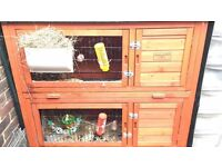 Two male rabbits + two storey hutch and accessories
