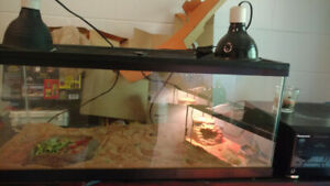 Reptile Enclosure | Kijiji in Ontario  - Buy, Sell & Save with