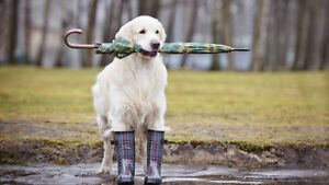 Tired of walking your dog in the rain?? Let us do it for you!