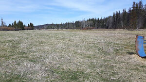 400 acres of  good hay land to be cut or you bring your cattels Williams Lake Cariboo Area image 9