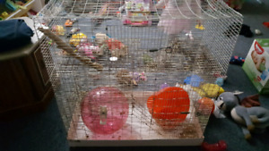 Free rodent cage