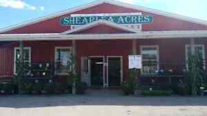 Farm fresh vegetables, birdseed, Berkshire Pork Cambridge Kitchener Area image 1