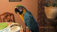 Macaw with Cage.