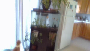 FULL PACKAGE AQUARIUM SET UP!!!!! WIKKID DEAL!!!!!