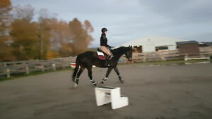 Reliable, responsive Dressage/Eventing mare for lease