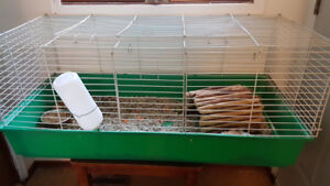 2 Guinea pigs, cage, shelter and food